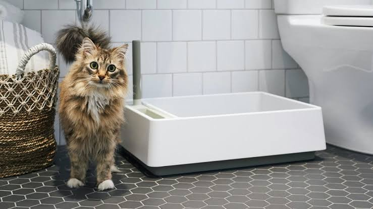 How to stop cats behavior from urinating outside the litterbox