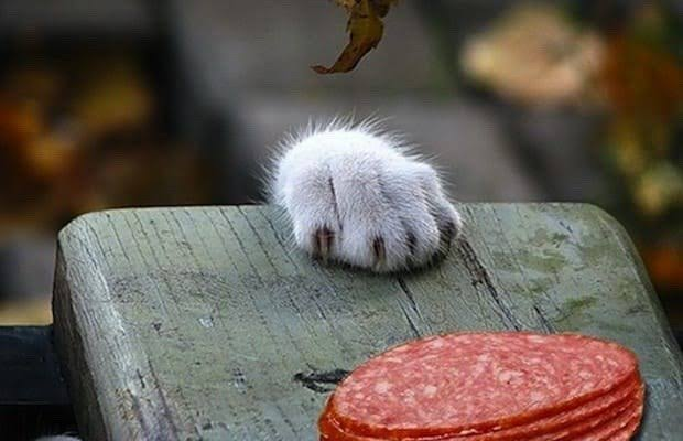 Can Cats Have Salami