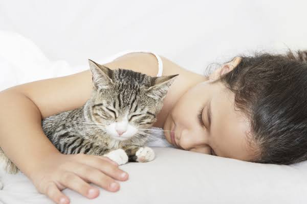 Top 13 Best Tips About How To Make your Cat Happy And Healthy