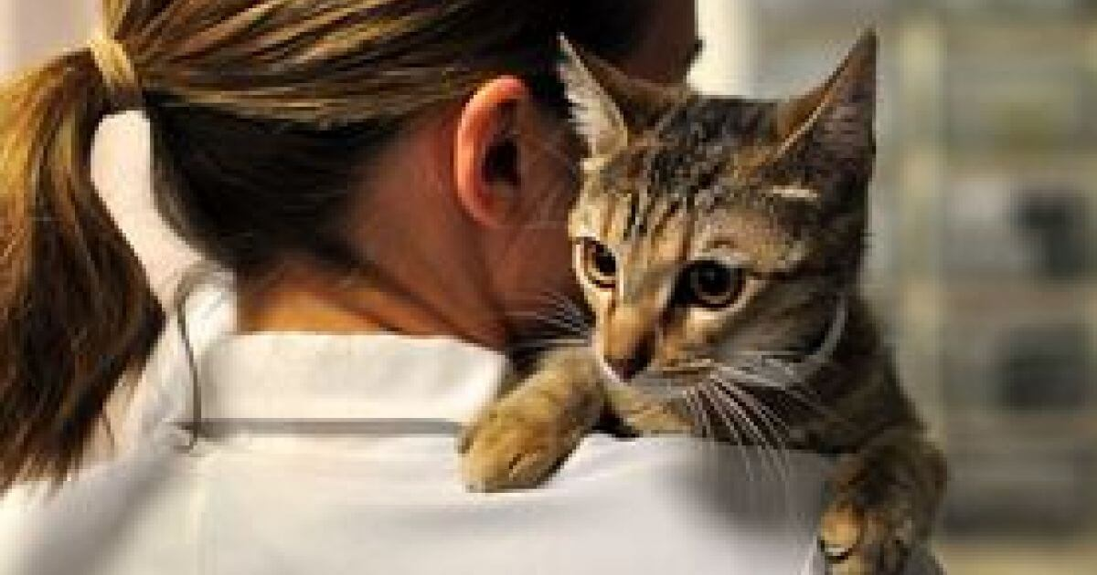 Top 10 Toxicities For Cats