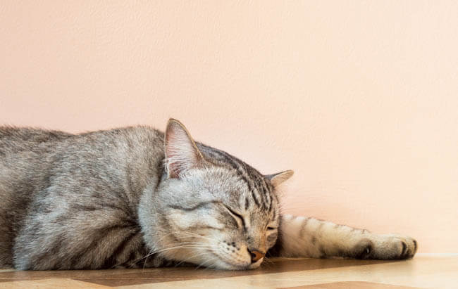 Why Do Cats Change Sleeping Spots?