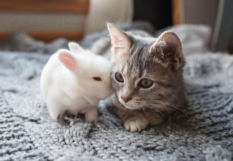 Can Cats And Rabbit Get Along?