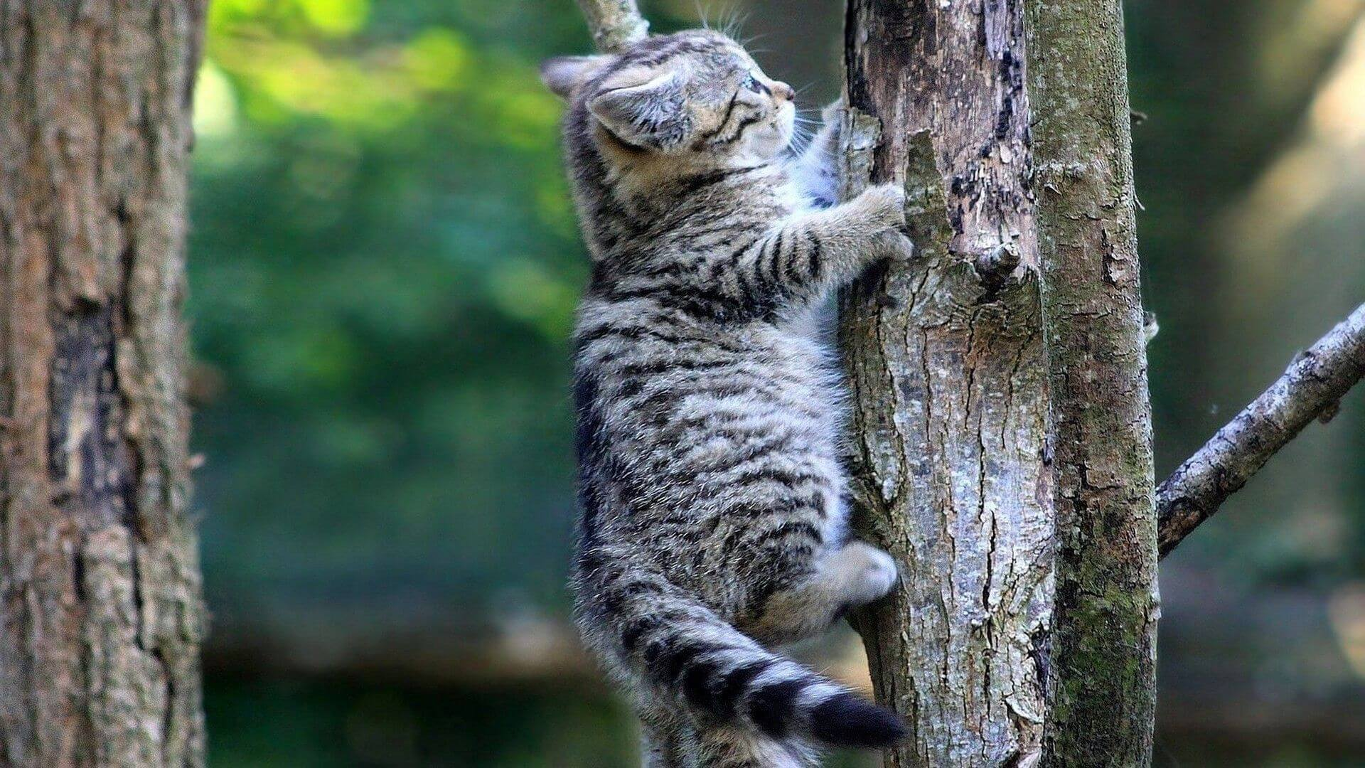 How To Rescue A Cat From A Tall Tree?