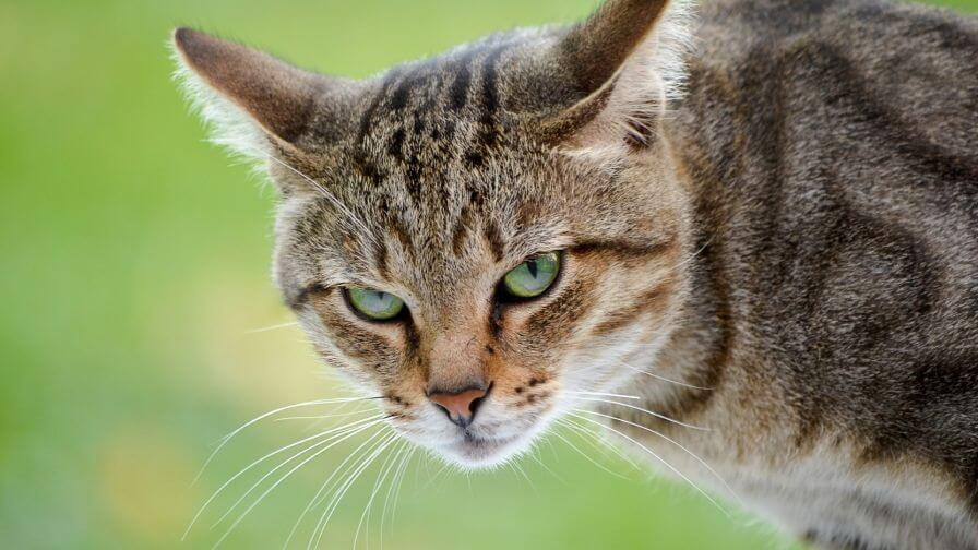 Some Important Tips About How To Calm An Angry Cat?