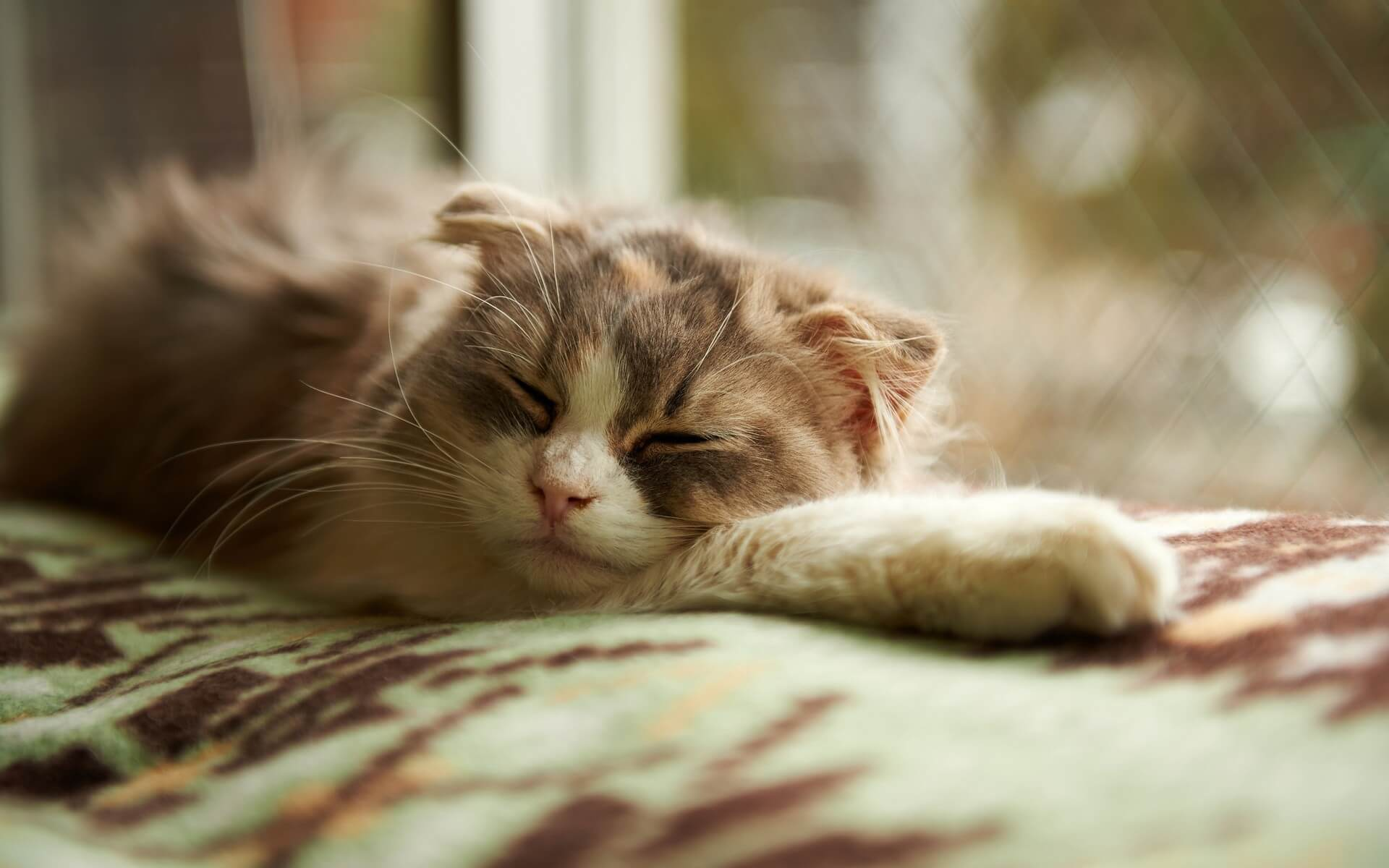 5 Reasons Why Cats Breathing Heavily While Resting?