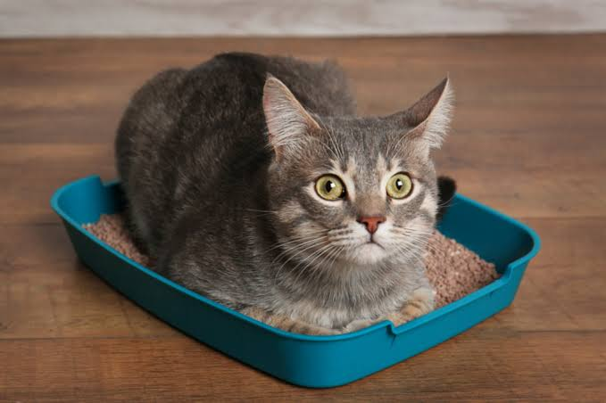 Why Cats Sometimes Sleep In The Litterbox?