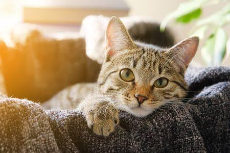 What Are The Symptoms Of Calicivirus In Cats? How To Diagnose This?